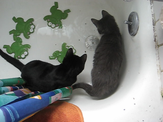 cats in a bath tub